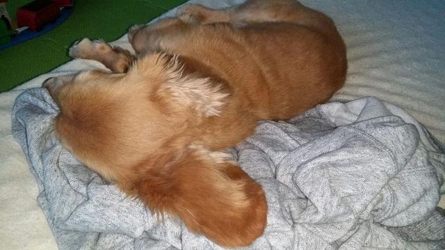 犬の寝場所